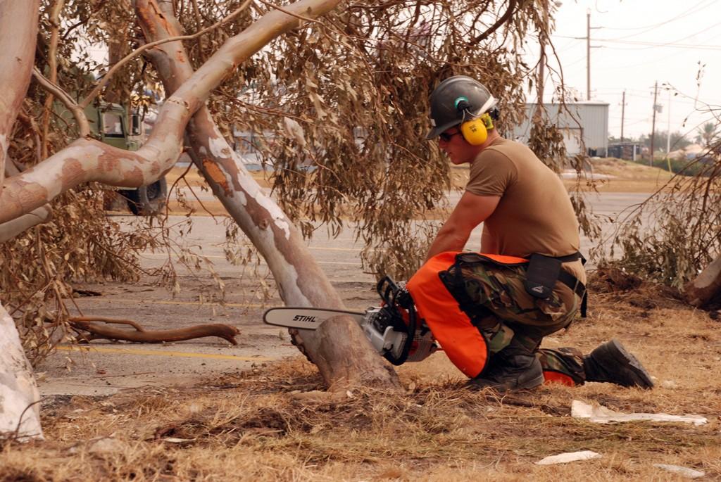 træbeskæring træfældning københavn